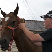 Man brushing horse