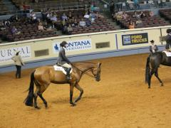 Hunter Under Saddle, Horse Judging