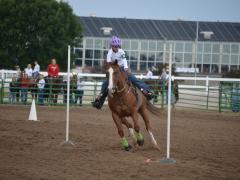 Pole Bending, Horse Judging