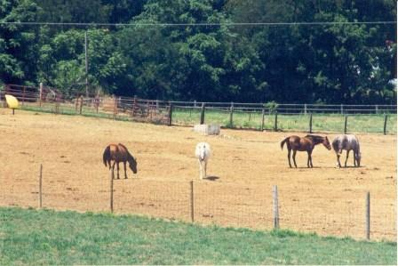 Horses in Dry Lot