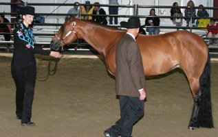 Showmanship inspection