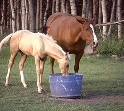 Foal and Health
