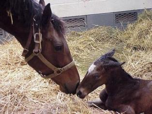 Care of the Newborn Foal – Horses