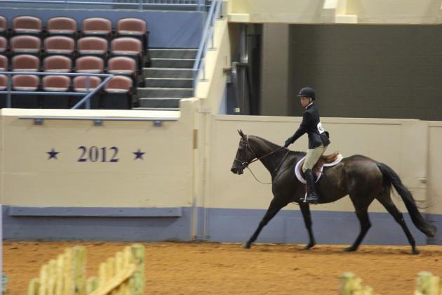 Jumping canter for Judging
