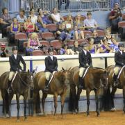 Hunter Under Saddle line up