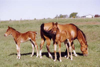 Mare with Twins