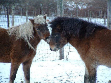 ponies playing