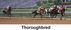 Thoroughbreds Racing