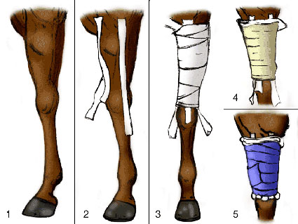 Wrapping a forearm in a horse