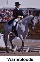 Warmblood Horse in the Dressage Arena