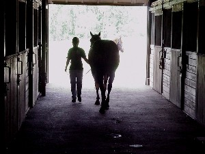 Leading Horse in barn