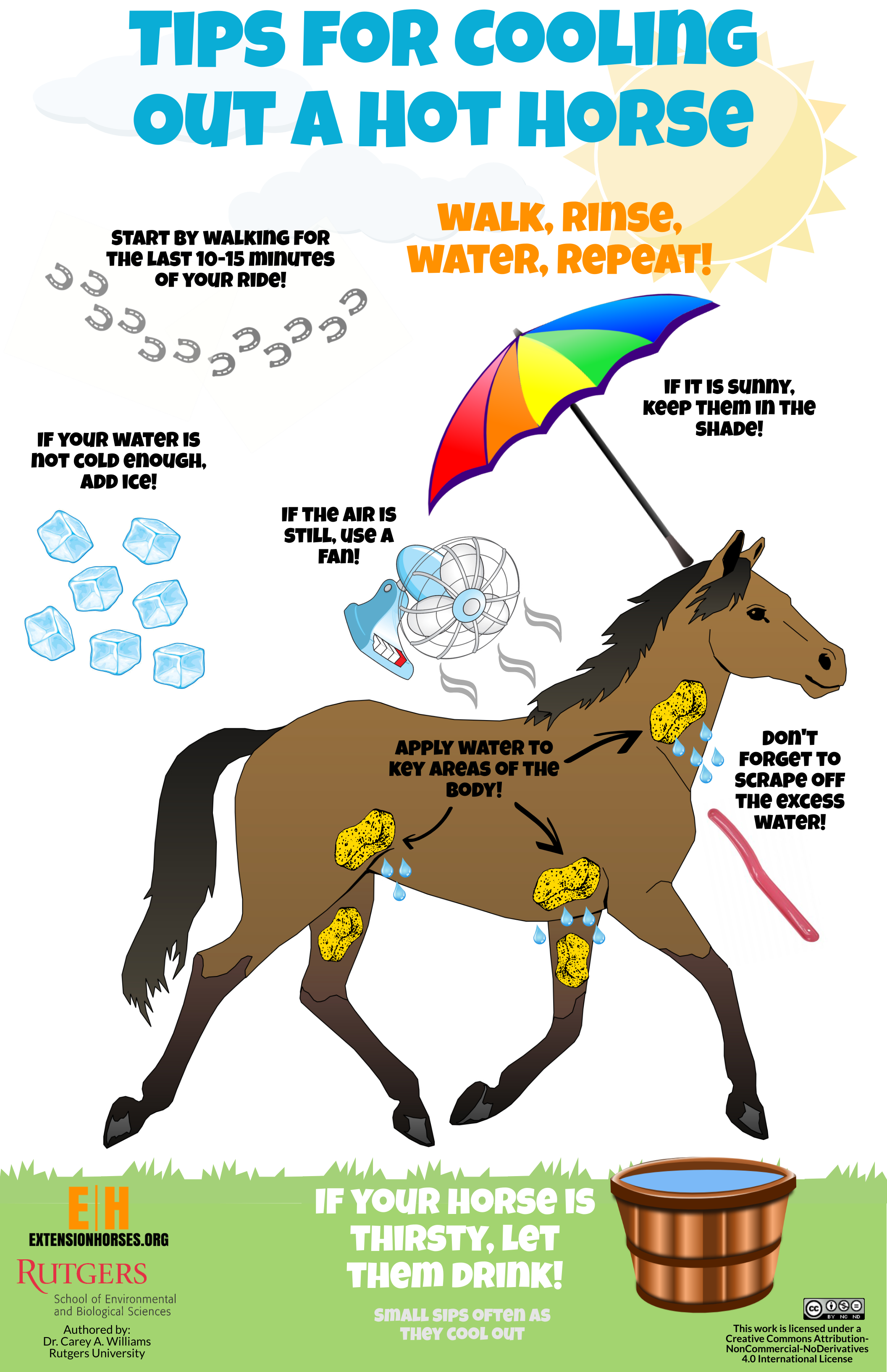 Tips for Cooling Out a Hot Horse